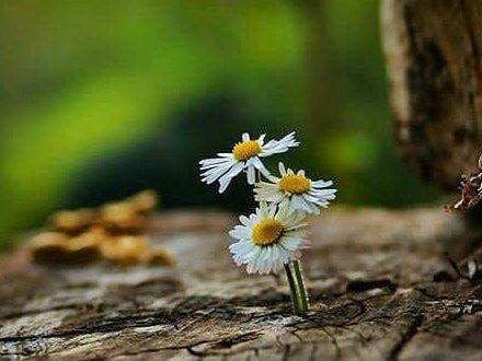 همه چیز در زندگی گذرا و موقتی است.